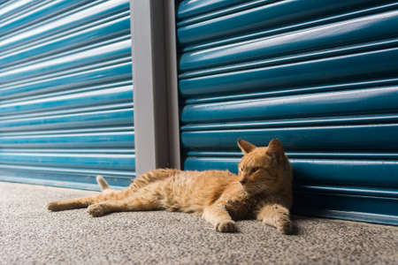 Tabby ginger cat rely in front of the blue iron gate to rest in the cat village of Houtong, Taiwan. photo
