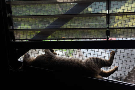 Silhouette of tabby cat supine on the famous bridge in the cat village of Houtong, Taiwan. photo