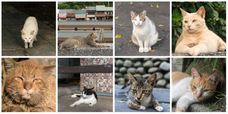 Collection of cat on the street in daytime. photo