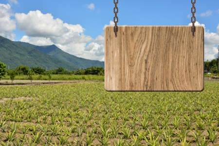 heave: Blank wooden sign on field of pineapplef arm. Concept of rural, idyllic, tranquility etc. Stock Photo