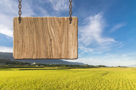 heave: Blank wooden sign on field of paddy farm. Concept of rural, idyllic, tranquility etc.
