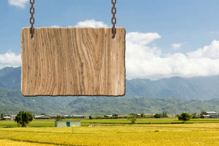 tranquility: Blank wooden sign on field of paddy farm. Concept of rural, idyllic, tranquility etc.