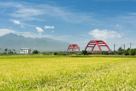 Rural scenery with golden paddy rice farm in Hualien, Taiwan, Asia. Imagens