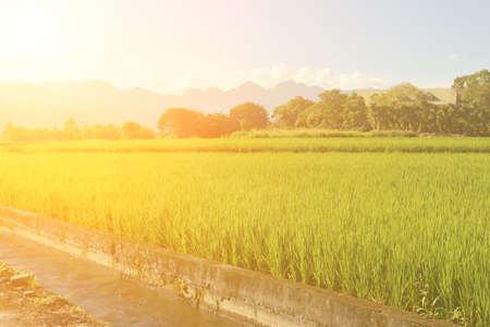 agriculturalist: Rice farm in the country, Hualien, Taiwan, Asia Stock Photo