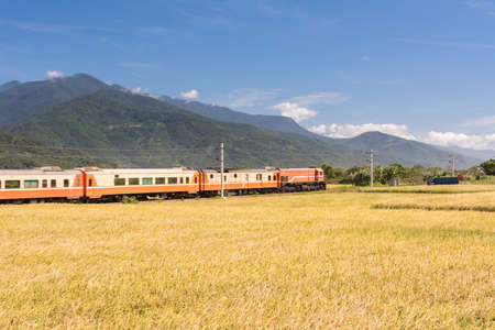 paddy: Rural scenery with golden paddy rice farm in Hualien, Taiwan, Asia.