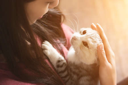 cat: An Asian woman play with her kitten at home.