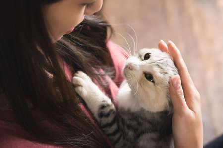 beautiful cat: An Asian woman play with her kitten at home.