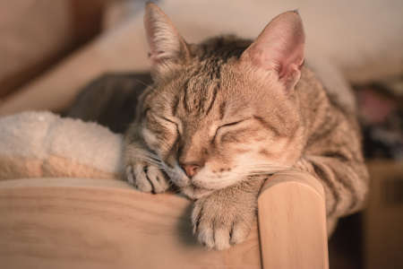 deep: Cat dozed with funny expression on ground in room. Stock Photo