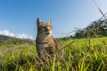 Cute domestic cat walk in the outdoor. Imagens