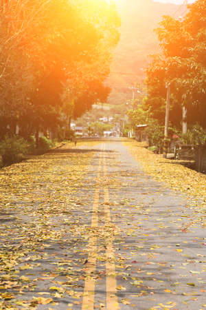 caoba: el camino del campo con las hojas en el suelo en primavera en Taiwán, el árbol llamado árbol de caoba de Honduras. Foto de archivo