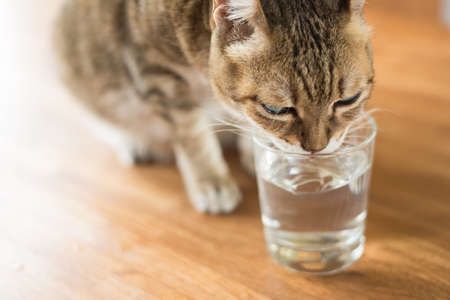 cat drink water on the table Imagens