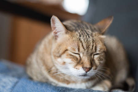 drowse: lazy domestic tabby cat sleep on the chair Stock Photo
