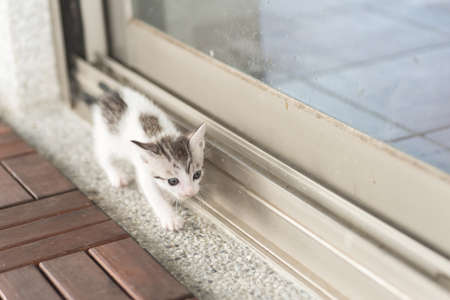 cat walk: little baby cat walk out from their home Stock Photo