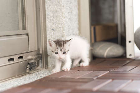 neonatal: little baby cat walk out from their home Stock Photo