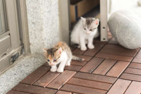 neonatal: little kitty play with her sister