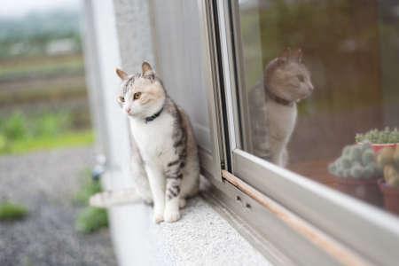 little one: one domestic little kitten portrait