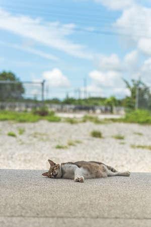 doze: Cat sleeping in the outdoor.