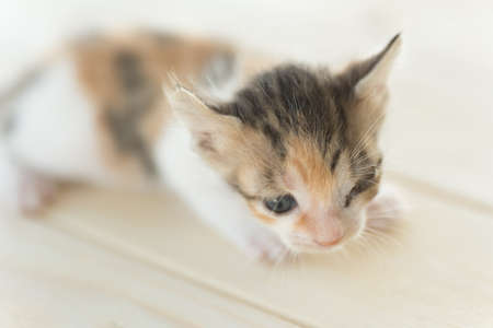 little one: sick little kitten with one eye blind, closeup image