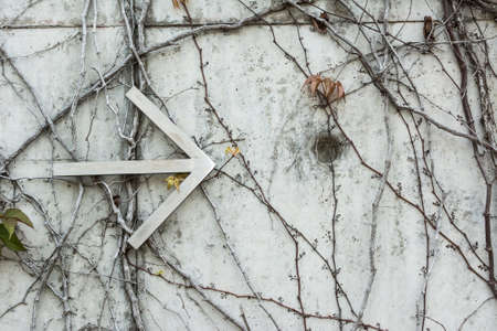 ivies: ivies and the arrow on a wall