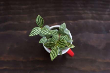 flower pot: succulent plant pot in the house