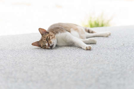 drowse: Cat sleeping in the outdoor.
