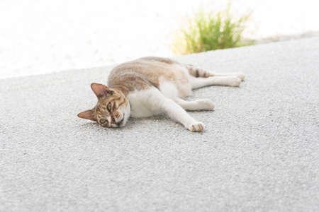 catnap: Cat sleeping in the outdoor.
