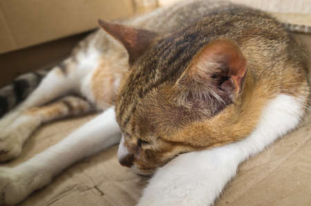 drowse: tabby cat sleeping in a paper box Stock Photo