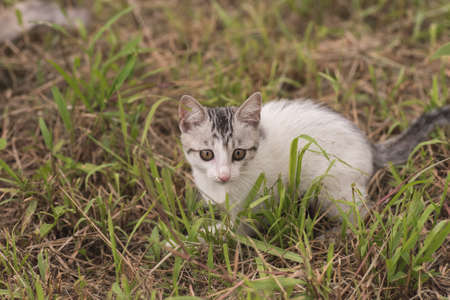 cat walk: little cat walk and play on the grassland