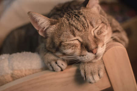 catnap: Cat dozed with funny expression on ground in room. Stock Photo