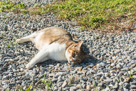 single animal: Cute domestic cat in the outdoor. Stock Photo