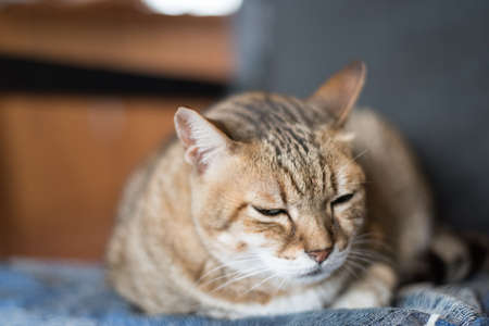 doze: lazy domestic tabby cat sleep on the chair Stock Photo