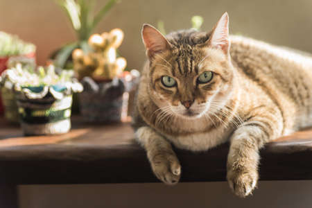 dwell house: lazy cat with a little unhappy expression sit on the chair at the home Stock Photo