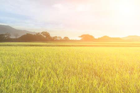 Paisaje rural de la granja de arroz en el municipio de Chishang, condado de Taitung, Taiwán, Asia.