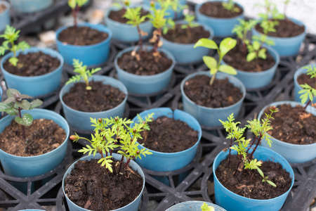 plant seed: Agriculture, Seeding, Plant seed growing concept.