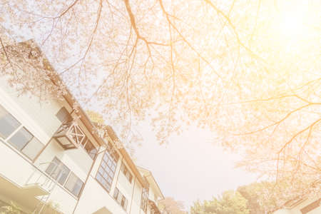 tree house: Cherry blossom scenery with house and tree under blue sky at Yoshino, Nara, Japan, Asia. Stock Photo