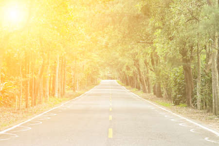 agriculturalist: Road across the forest with nobody. Stock Photo
