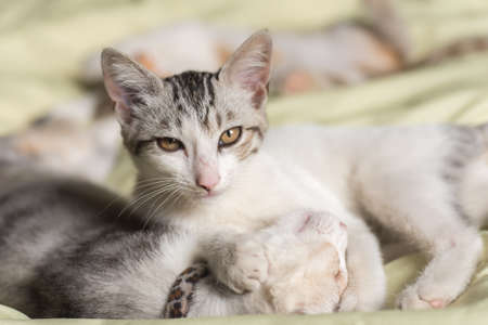 little newborn cat sleep on bed with her family Stock Photo