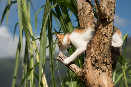 climb: little cat climb the tree in the outdoor