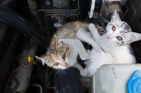kleine kat slapen op de motor van een auto