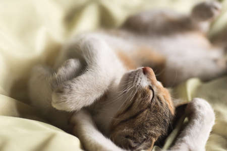 catnap: little newborn cat sleep on bed with her family Stock Photo