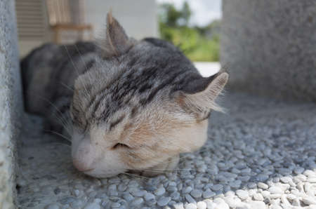 Cat sleeping in the outdoor