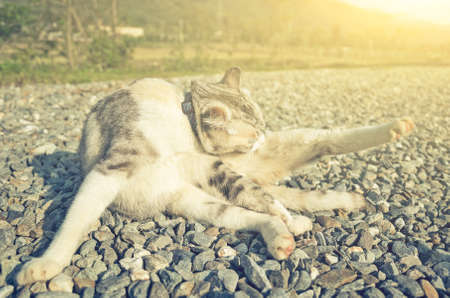 little cat itch in the outdoor