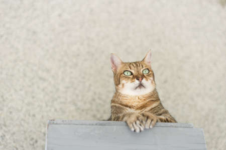 domestic tabby cat sit on the table in the outside