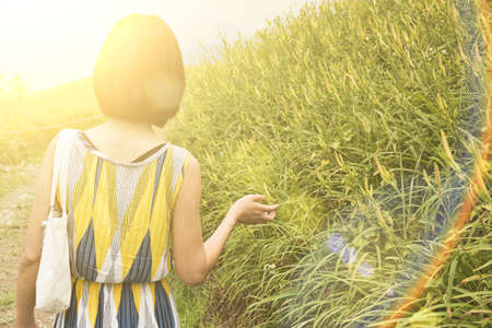 asian woman traveling at the yellow tiger lily farm Stock Photo