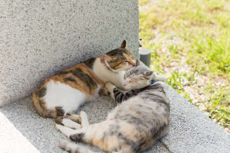 young cat lick her mother for clean the ears in the outside