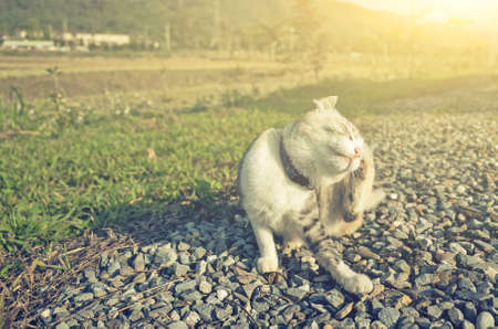 little cat itchy in the outdoor