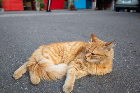 stray cat lying on the ground at street