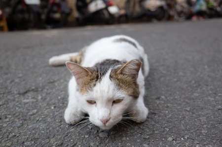 stray cat play on the ground at street