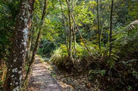 small path with nobody at tropical forest, Taiwan