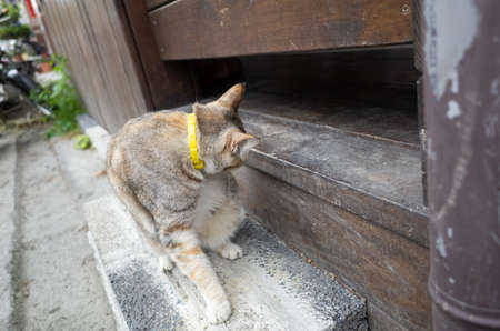 domestic tabby cat itching sit on the ground 版權商用圖片